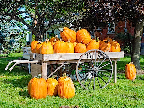 A Cart of Pumpkins